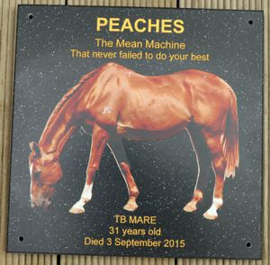 Horse memorial plaque engraved corian stone Black quartz gold fill and colour photo