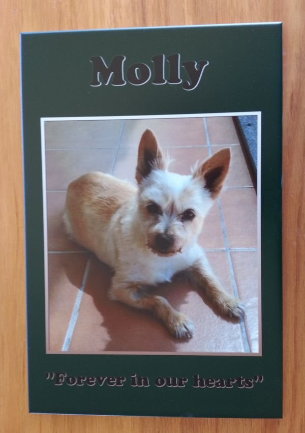 Thumb_Tile memorial print Molly on green background