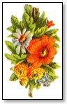 Floral orange and white daisy 002