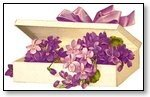 Floral violets in box with ribbon 005