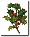 Christmas sprig of holly Image 284