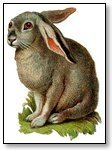 Rabbit with drooping ear 049