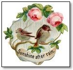 Animal bird sunshine after rain 168