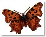 Butterfly brown darker spots 190