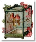 Love birds in square cage 205