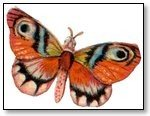 Orange tinted butterfly 216