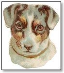 Dog white face light brown patches 275