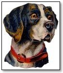 Animal Dog with red collar 281