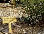 Timber Engraved Garden Marker