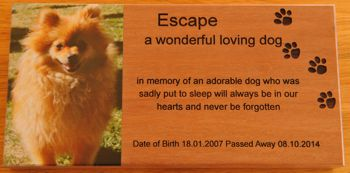 The Meaning of a Pet Memorial