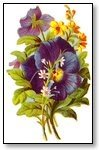 Floral pansies purple 003