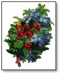 Christmas holly and blue bells 265
